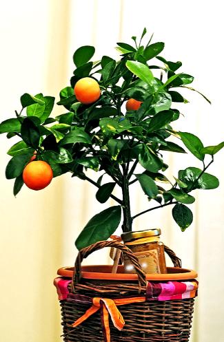 gostinay v oranzhevom cvete 8