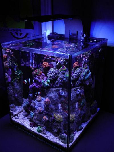 neobichnie_akvariumi_3
