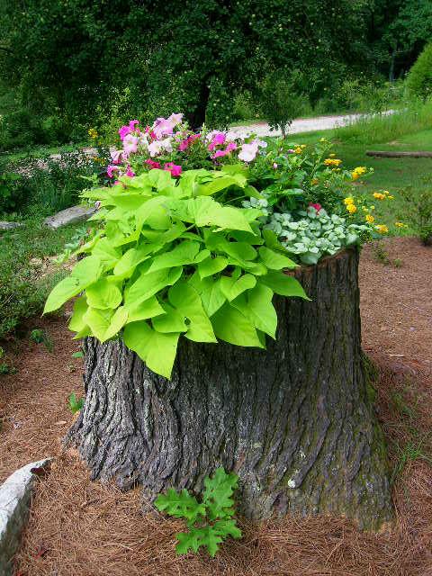Как украсить пень в саду.