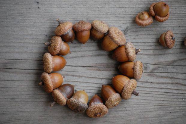 Идеи поделок из желудей – лучшие варианты на более 60 фото
