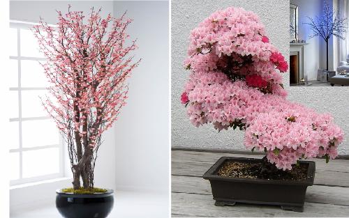 Sakura v interere doma 12