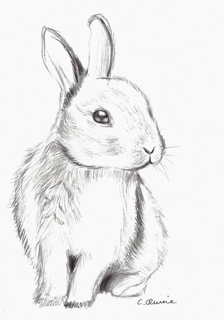 рада картинки рисовать карандашом зайчик сочетаются вышивкой, ажуром
